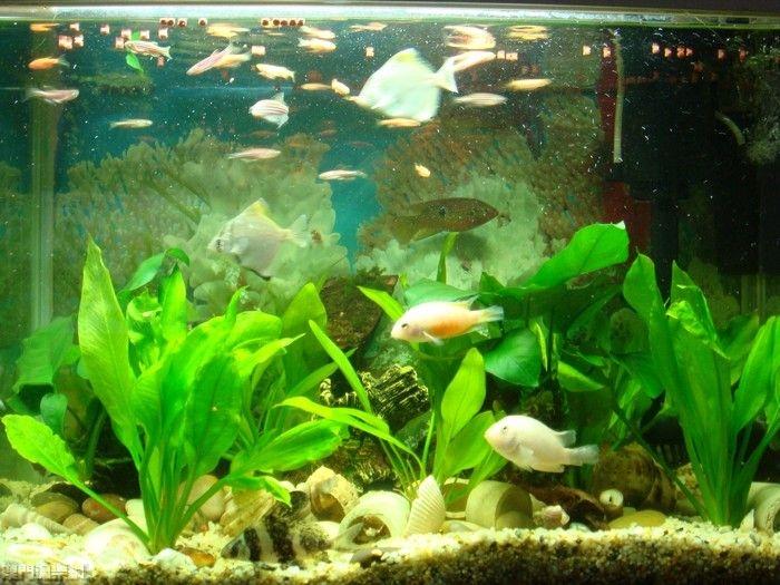 魚缸水綠該如何解決?