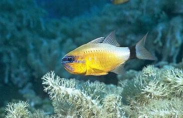 觀賞魚在魚缸上層遊動的思考