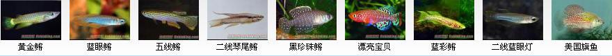 卵生鳉鱼科概述