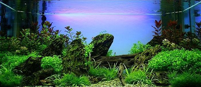 魚缸造景中沉木的用法