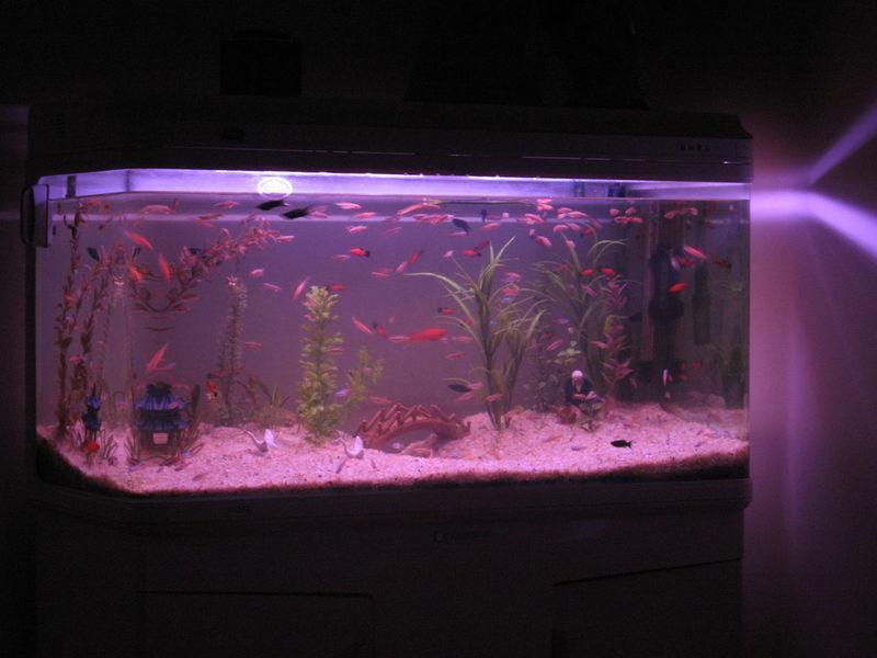鱼友该怎样选购水族箱和鱼缸