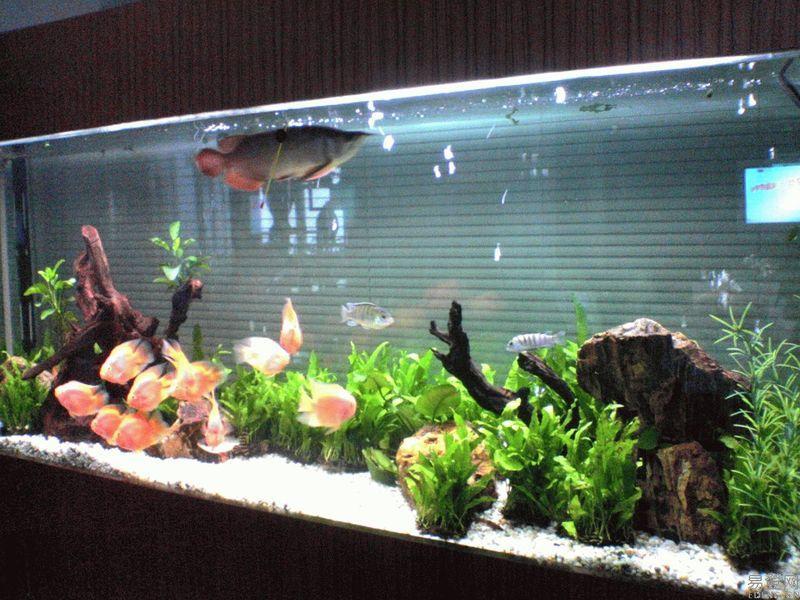 魚缸和水族箱底部便便的處理