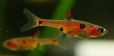 草缸燈魚飼料的選擇及方法