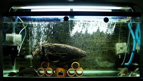 鼠魚繁殖的小經驗