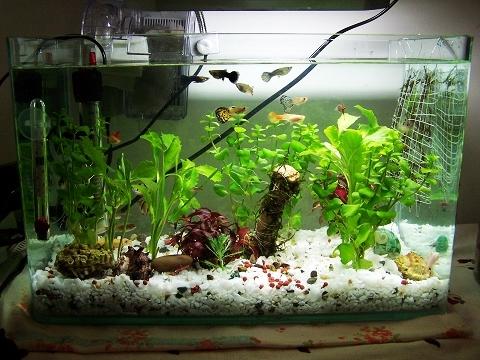 魚缸生物過濾介紹