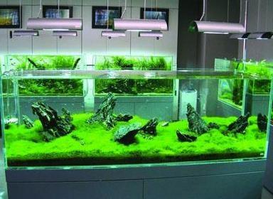 鱼缸去除油膜的方法