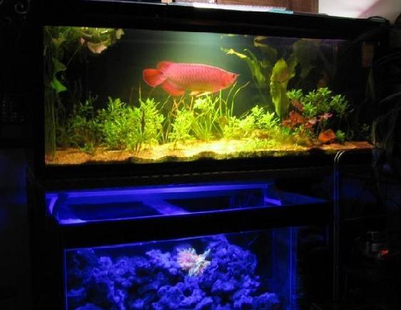 更換魚缸對龍魚的影響