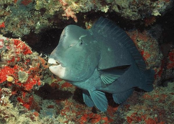 羅漢魚的基本飼養設備